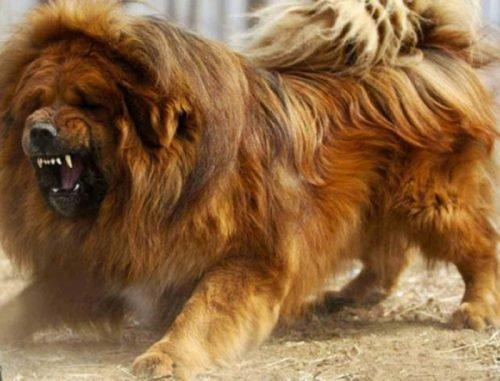 91abb3b2b28de882a40cb18ddbaa58a9 amazing dogs beautiful dogs e1516622302904